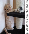 Cat standing on two legs 76636626
