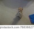 animal, animals, cat 76636627