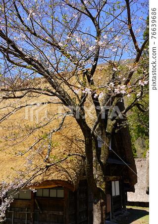 Gokayama village's village 76639686