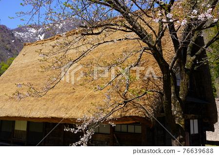 Gokayama village's village 76639688