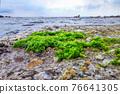 boccadasse genoa old village stone beach algae 76641305