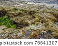 boccadasse genoa old village stone beach algae 76641307