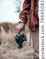 Closeup of farmers hand with blue ripe grapes. Fresh blue bunches of grapes. Harvesting in autumn 76645083