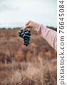 Farmer hand holding fresh blue bunch grape 76645084
