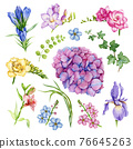 Garden flower set. Freesia, forget-me-not, iris, hydrangea, ivy, hedera floral element collection. Watercolor hand drawn illustration set. Bright summer flowers and herbs on white background 76645263