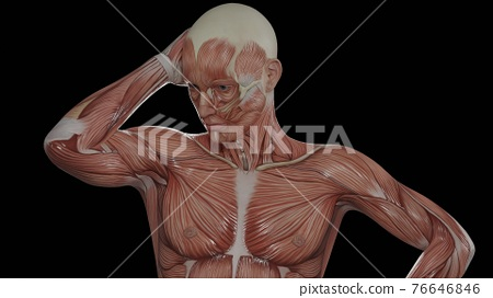 3d animation of muscle human 76646846