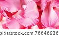 pink spring flowers 76646936