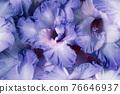 purple spring flowers 76646937