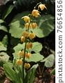 花朵 花 花卉 76654856