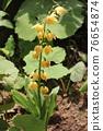 花朵 花 花卉 76654874