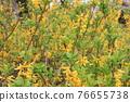 花朵 花 花卉 76655738