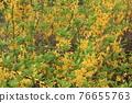 花朵 花 花卉 76655763