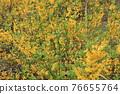 花朵 花 花卉 76655764