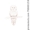 digital pencil drawing of a bird - an owl on a branch 76660159