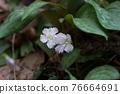花朵 花 花卉 76664691