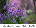 花朵 花 花卉 76664692