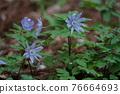 花朵 花 花卉 76664693