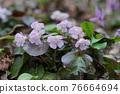 花朵 花 花卉 76664694