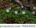 花朵 花 花卉 76664695