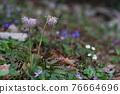 花朵 花 花卉 76664696