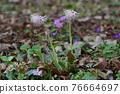花朵 花 花卉 76664697