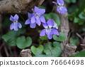 花朵 花 花卉 76664698