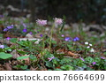 花朵 花 花卉 76664699