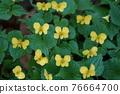 花朵 花 花卉 76664700