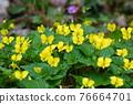 花朵 花 花卉 76664701