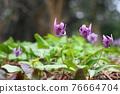 花朵 花 花卉 76664704