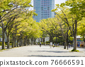 yoyogi park, spring, april 76666591