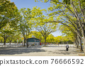 yoyogi park, spring, april 76666592