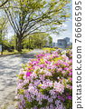 Spring Yoyogi Park 76666595