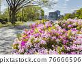 Spring Yoyogi Park 76666596