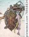 海龜 76668834
