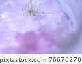 bloom, blossom, blossoms 76670270