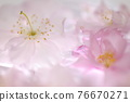 bloom, blossom, blossoms 76670271