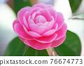 粉紅色的花 76674773