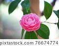 粉紅色的花 76674774