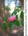 粉紅色的花 76674776
