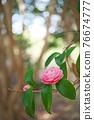 粉紅色的花 76674777