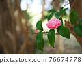 粉紅色的花 76674778
