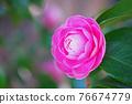 粉紅色的花 76674779