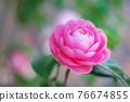 粉紅色的花 76674855