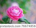 粉紅色的花 76674856