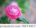 粉紅色的花 76674857