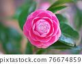 粉紅色的花 76674859
