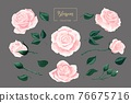 Cream pink roses blossom collection. Rose flowers set isolated on gray 76675716
