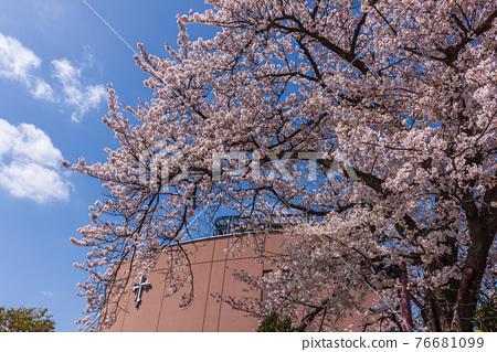 cherry blossom, school, schoolhouse 76681099