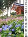 mimurato-ji temple, hydrangea, rainy season 76682303